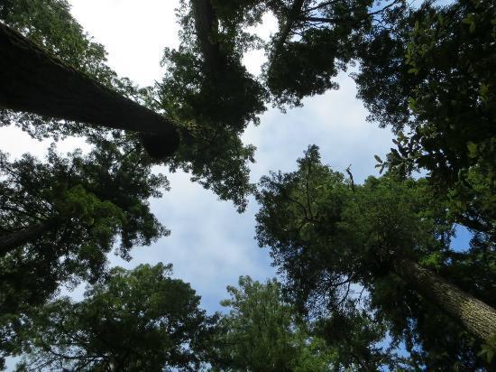 Redwood National Park : Lady Bird Johnson Grove Redwoods.