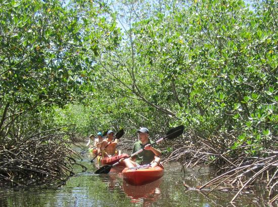 Kayak Utila: On our way through the mangroves