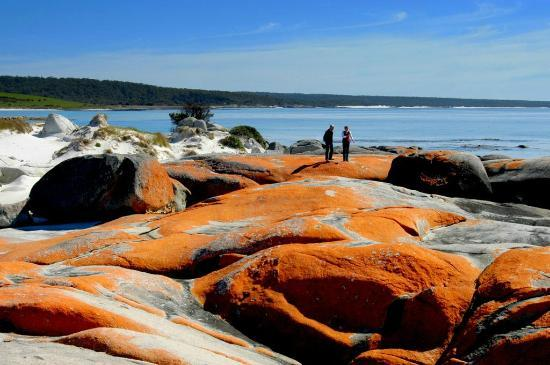 Addlestone House Bed and Breakfast: Bay of Fires - Orange Lichen on Rocks
