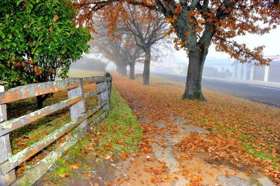 Addlestone House Bed and Breakfast: St Marys - Autumn Fog