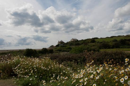 Seven Sisters Country Park: Flowers in Seven Sisters Park