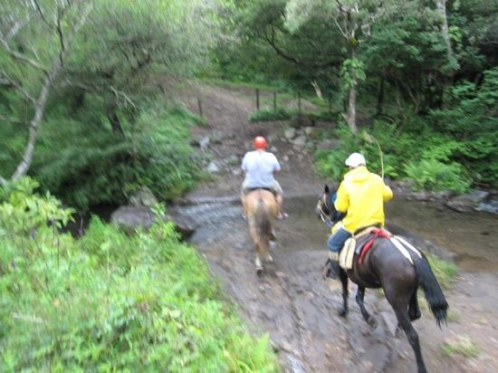 Costa Rica Best Trips: horse back riding to the platforms