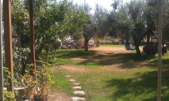 Hanioti Village Resort: Figs & Olive trees on the grounds
