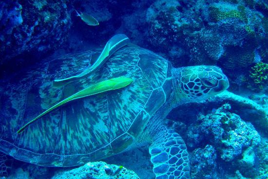 Quo Vadis Dive Resort: Taken during a dive just offshore