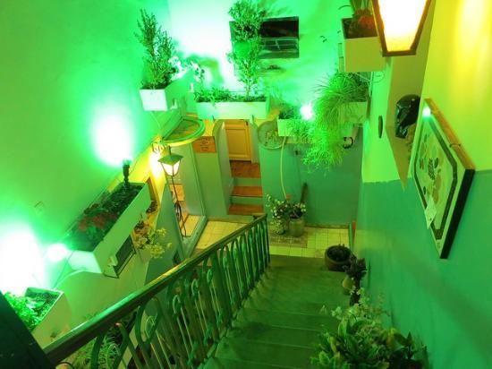 Old Jaffa Hostel : Interior stairs down
