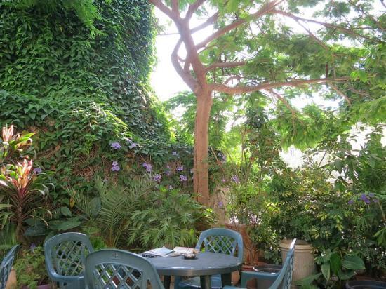 Port Inn: Garden view