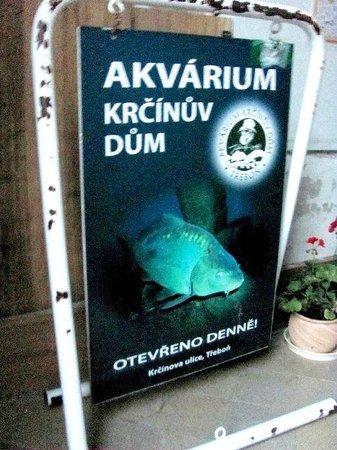 Akvarium Museum
