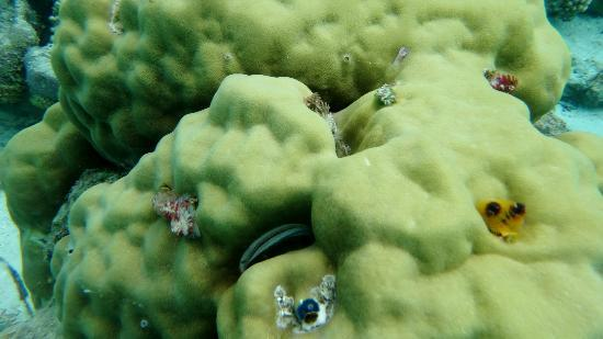 Moyyan House by the Sea: Xmas tree worms off Moyyan beach