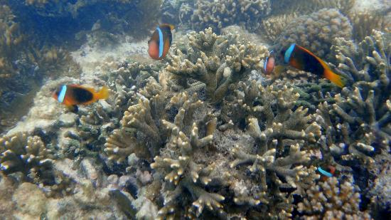 Moyyan House by the Sea: 100's of clown fish 5m off coast at Moyyan