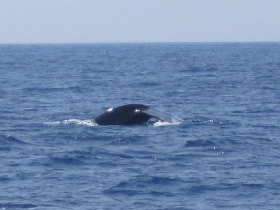 Whale-Dolphin WatchingTours