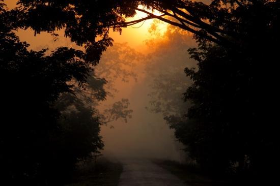 United 21 Grassland Resorts: Entrance of the Kaziranga NP during sunrise...