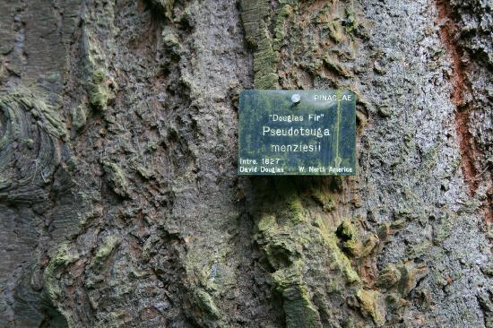 Glamis Castle: En el Arboretum