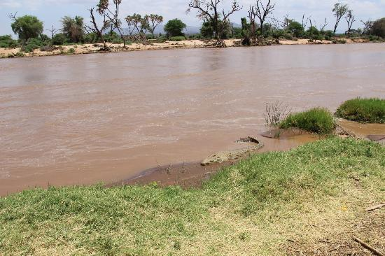 Samburu Game Lodge: Right on the river near our camp on the river...