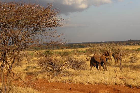 Samburu Game Lodge: The beautiful landscape of Samburu...