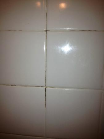 Hilton Philadelphia City Avenue: Mold on the shower tile