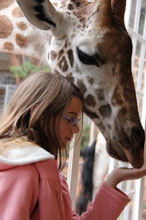Giraffe Manor: Up close & personal giraffe encounters at breakfast & early evening