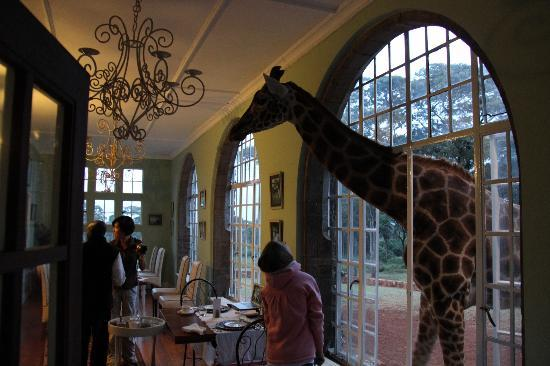 Giraffe Manor: Breakfast..the reason you come here!