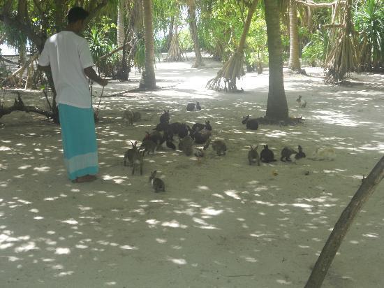 Kanuhura - Maldives: bunnies on the other island