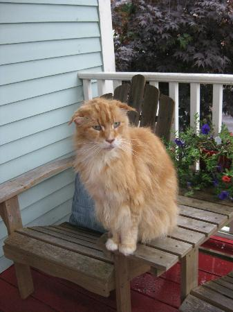 ‪‪Ripples Inn at the Harbor‬: Ripples Inn's Friendly Maine Coon Cat