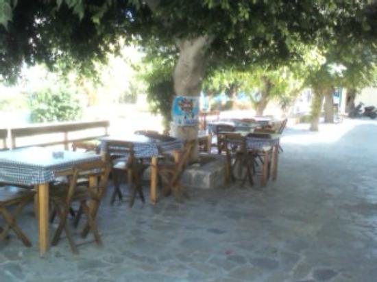 Omonoia Cafe: The tree of Omonoia