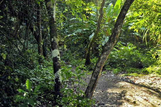 Corcovado National Park: sendero or path