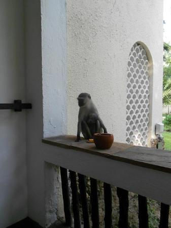 Severin Sea Lodge: Don't leave your food outside