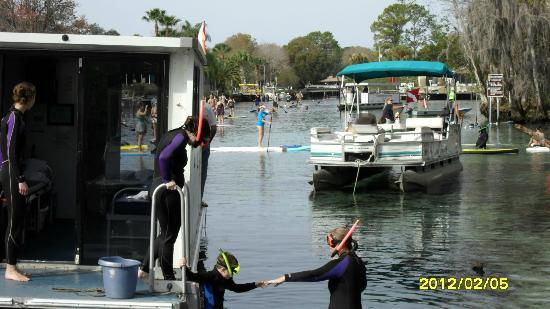 Sunshine River Tours - Crystal River Manatee Tours: Dozens more paddleboarders came