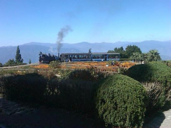 Darjeeling Himalayan Railway 사진