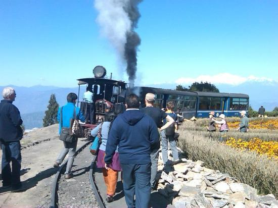 Darjeeling Himalayan Railway: Toy Train a major attraction to Foreign Tourists