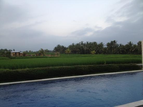 The Samara: swimming pool