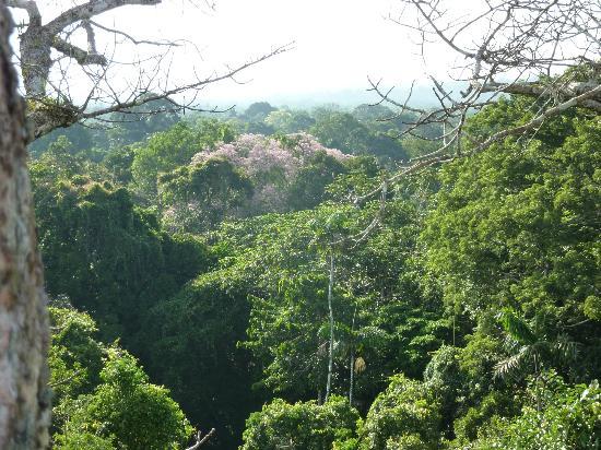 Napo Wildlife Center Ecolodge: im Gipfel eines Baumes