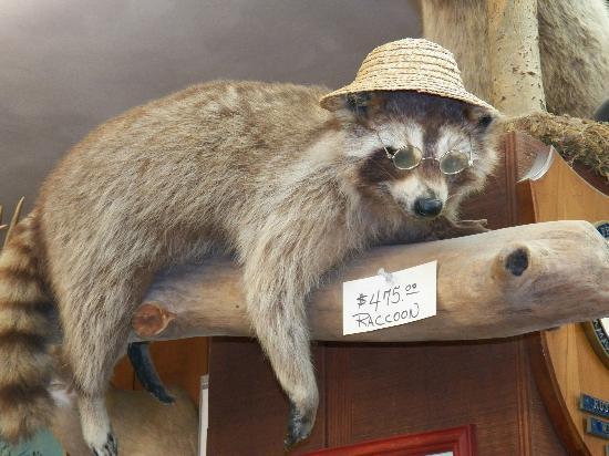 Wisconsin Deer Park: Buy a trophy of a stuffed animal