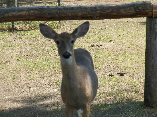 Wisconsin Deer Park: You want to feed me