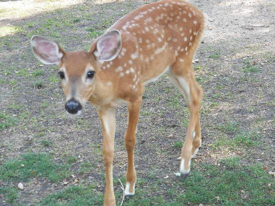 Wisconsin Deer Park: Please I would like one of those crackers