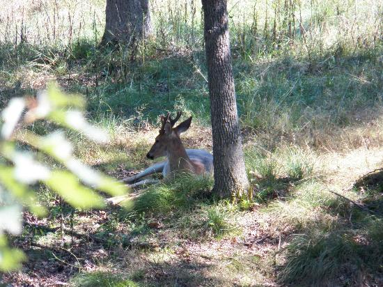 Wisconsin Deer Park: Hidden