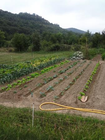 La Fargo: Vegetable garden