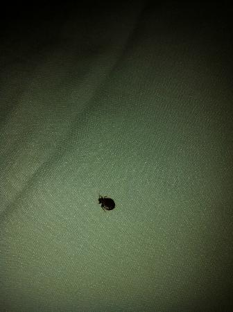 Sand Dunes Resort & Spa : bugs on the bed, atleast 8-10 I caught & showed to the staff.