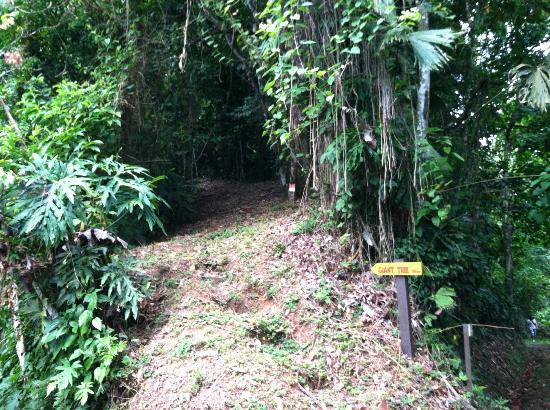 Samasati Retreat & Rainforest Sanctuary: Hiking trails are all over the property. Take a walking stick from the front desk.
