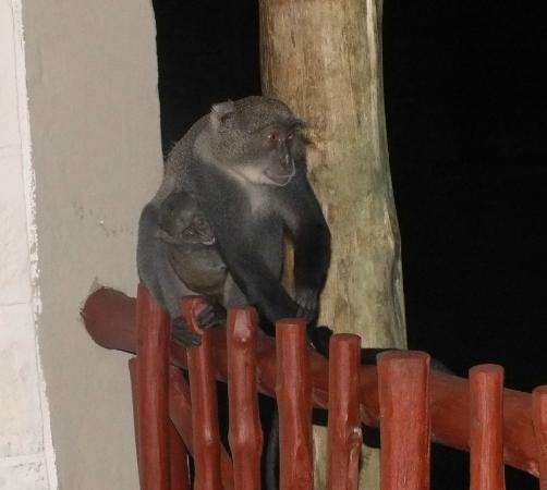 Baobab Beach Resort & Spa: mummy and baby on our balcony
