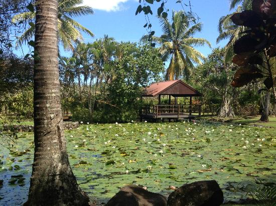 Gecko's Resort : Lily Pond with lots of Frogs!