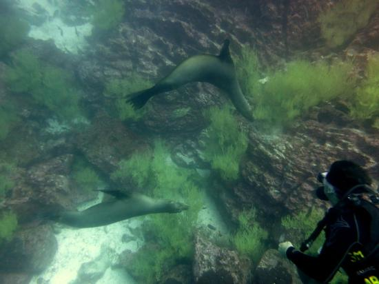 Academy Bay Dive Center: Diving with Sea Lion pups