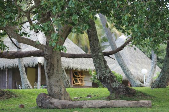 Gite Saint-Gabriel: vue des bungalows