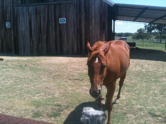 Winding Ridge Bed and Breakfast: meet and greet with one of the horses