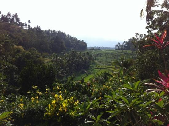 Pondok Batur Indah: Uitzicht Batur Indah Homestaying