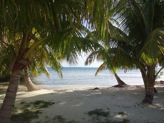 Hatchet Caye Resort: paradise