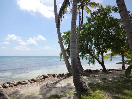 Hatchet Caye Resort : paradise
