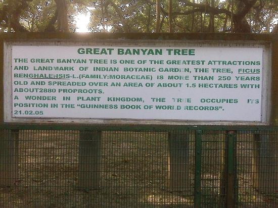 Howrah, Indie: The Great Banyan Tree