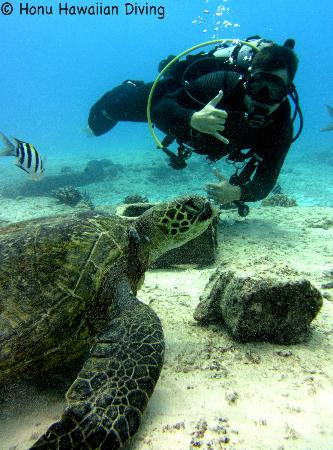 Honu Hawaiian Diving : Jarrod With a Honu