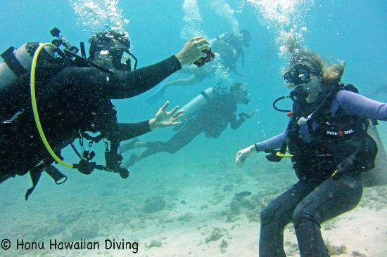Honu Hawaiian Diving : Finding Octopus