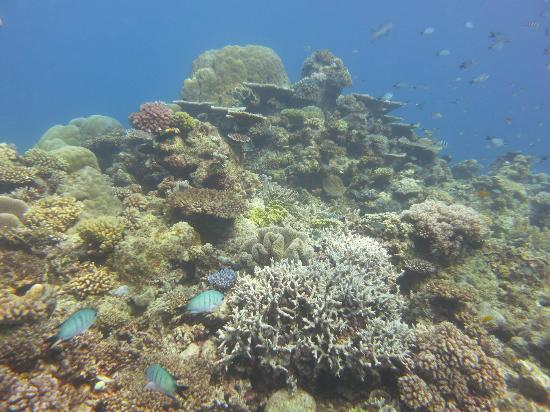 Gbr picture of pro dive cairns day trips cairns tripadvisor - Pro dive cairns ...
